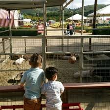 Pumpkin Patch Animal Farm In Moorpark California by Underwood Family Farms 1025 Photos U0026 504 Reviews Csa 3370