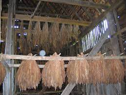 Tobacco Hanging From Rack- Set/prop | Anna In The Tropics | Pinterest 24x40x12 Residentiagricultural Barn In Ashland Va Rmh14012 Another Beautiful Old Tobacco Barn Pittsylvania County Virginia Metal Garages Barns Sheds And Buildings Tomahawk Ribeye 46oz From Aberdeen Beach The Sierra Vista Wedding Venues Pinterest June 2017 Roadkill Crossing Mail Pouch Southern Indiana This Is A Few Mil Flickr Green Bank West On Farm Rural Pocahontas Tobacco Reassembled Albemarle Joseph Windsor Castle Smithfield Va These Days Of Mine Barnscountry Living
