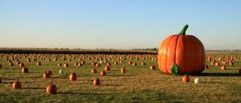 Northeast Iowa Pumpkin Patches by Geisler Farms Growing Family Fun