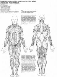 Muscular System Coloring Pages