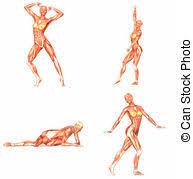 interieur corps humain femme anatomie corps femme image look organs stylisé
