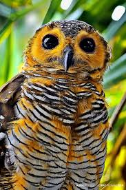 153 Best Owls Images On Pinterest | Beautiful Birds, Beautiful ... 3716 Best All About Owls Images On Pinterest Barn Owls Nature Winter Birding Guide Lake Champlain Region 53 Flight At Night Owl Species Farm House England Stock Photos Images 1538 Owls Photos Beautiful Birds 2552 Give A Hoot Children Large White Carraig Donn Mayo Sghilliard Glass Studio Little Opens In Westport Food Drink Nnecticutmagcom 250 Love You Always