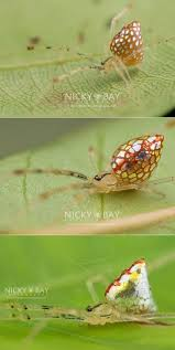 Remains Of The Day Spiders by 54 Best Beautiful Spiders Images On Pinterest Animals Insects