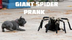 Halloween Scary Pranks Ideas by Giant Spider Prank 4k Spider And Dog Included Halloween Pranks