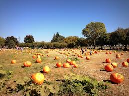 Wheatland California Pumpkin Patch by Elevation Of Wheatland Ca Usa Maplogs