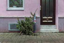 Types Christmas Trees Most Fragrant by 5 Environmentally Smart Ways To Dispose Of Your Christmas Tree