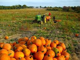 Best Pumpkin Apple Picking Long Island Ny by The 25 Best Harbes Farm Ideas On Pinterest Long Island Winery