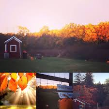 Pumpkin Picking In Chester Nj by Hacklebarney Farms Cider Mill 70 Photos U0026 47 Reviews Fruits