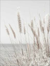 leinwandbild gräser magda izzard
