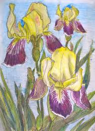 Gallery How To Use Watercolor Pencils Drawing Art