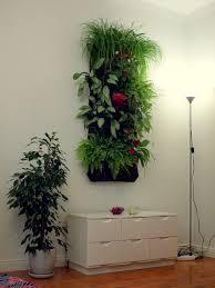 vertical gardening hängende tomaten und lebendige bilder