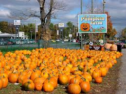 Pumpkin Farm Clarence Ny by The World U0027s Best Photos Of Buffalo And Pumpkins Flickr Hive Mind