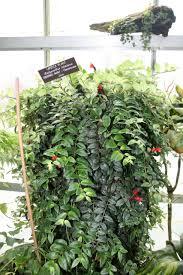 entretien plante grasse d interieur quelles plantes d intérieur retombantes choisir