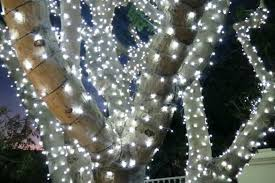 How To Wrap Trees With Outdoor Lights Hanging Christmas Outside Tree