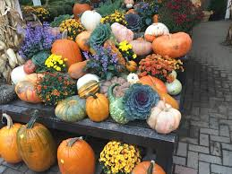Santa Cruz Pumpkin Patch 2015 by October Life Lately Well Traveled Wife