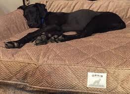 orvis dog beds korrectkritterscom