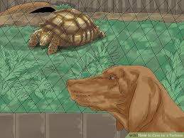 how to care for a tortoise with pictures wikihow