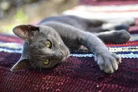 Iris Prolapse In Cats