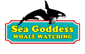 Sea Goddess Whale Watching - Adult Advance Auto Parts Coupons 25 Off Online At Hpswwwpassrttosavingsm2019coupon Auto Parts 20 Coupon Code Simply Be 2018 How To Set Up Discount Codes For An Event Eventbrite Help Paytm Movies Offers Sep 2019 Flat 50 Cashback 35 Off Max Minimum Discount Code Percent Coupon Promo Advance Levi In Store 125 Isolation Tank Sale Best Deals On Travel Codes By Paya Few Issuu Rules Woocommerce Wordpress Plugin