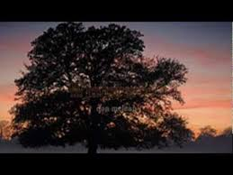 Empty Chairs Don Mclean Free Mp3 Download by Winterwood Don Mclean Youtube