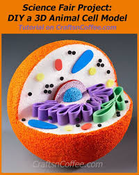 Save this tutorial DIY a model of an animal cell CraftsnCoffee