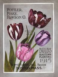 heirloom dahlias with kunst bulbs gardens and dahlia