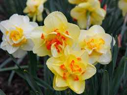 plant bulbs now for flowers northton pa patch