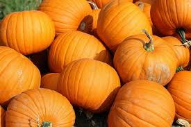 Worlds Heaviest Pumpkin Pie by Pumpkin Pie A Lasting Trend The Sugar Vine