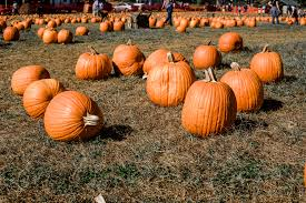 Pumpkin Picking Nj by Apple Picking In New Jersey The A List A Blog By