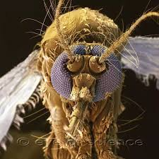 What are some mind blowing close up images of insects