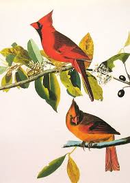 VIntage Birds Print Audubon Of By NaturalistCollection