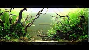 Nature Aquascape Style Part #4 - YouTube Aquascaping Nature Aquariums Of Zoobotanica 2013 Youtube Aquascape The Month November 2009 Riverbank Aquascaping Style Part 5 Roots By Papanikolas Nikos Awards Aquascapes Lab Tutorial River Bottom Natural Aquarium Plants The Planted Tank 40 Gallon Aquarium Everything About Incredible Undwater Art Cube Tanks Aquariums Dutch Vs How To A Low Tech Part 1