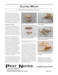 Clothes Moths Integrated Pest Management