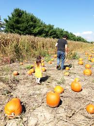 Wisconsin Pumpkin Patches 2015 by 2015 Pumpkin Patch Fun Defining Lovely