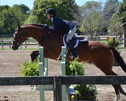River Pine Farm - Huntsville, AL Autumn Hills Farm Pin By 21 Days Diet Plan On Horses Pinterest Horse Hunter Hunters Jumpers Equitation Equestrian Hillmar Farm Welcome Beckett Run Inc About Us News Alabama Association Corrstone Huntjumper Traing Barn In Modesto And Saratoga Holiday Giving Equestrian Style The Peeps Foundation Is The 744 Best Hunter Jumpershow Jumping Images Florida Jumper Show Barns Med Kennedy Grove Stables Tommi Clark Chosenbrook Show Jumper Sale