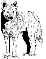 coyote clipart OurClipart