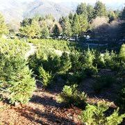 Santa Cruz Ca Christmas Tree Farms by Patchen California Christmas Tree Farms 39 Photos U0026 34 Reviews