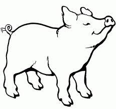 Pig Animal Coloring Book