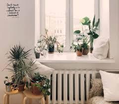 pflanzen tipps das zuhause einrichten mit pflanzen