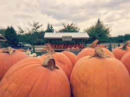 Pumpkin Farms In Wisconsin Dells by More Than Apples At All Seasons Orchard In Woodstock Pumpkin And