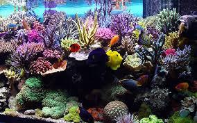 fond d ecran aquarium anime gratuit pour pc 28 images t 233 l