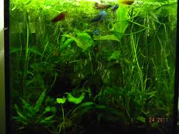 An Intermediate Guide To Aquascaping – Aquaec Tropical Fish An Inrmediate Guide To Aquascaping Aquaec Tropical Fish Most Beautiful Aquascapes Undwater Landscapes Youtube 30 Most Amazing Aquascapes And Planted Fish Tank Ever 1 The Beautiful Luxury Aquaria Creating With Earth Water Photo Planted Axolotl Aquascape Tank Caudataorg 20 Of Places On Planet This Is Why You Can Forum Favourites By Very Nice Triangular Appartment Nano Cube Aquascape Nature Aquarium Aquascaping Enrico A Collection Of Kristelvdakker Pearltrees