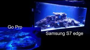 aquarium recifal 300l re led evergrow it5080 demonstration