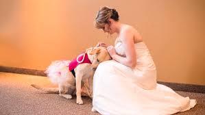 Pumpkin Patch Sioux Falls Sd by Photo Of South Dakota Bride Service Dog Goes Viral Inforum