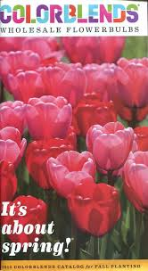 buy colorblends wholesale flower bulbs for fall planting 2015