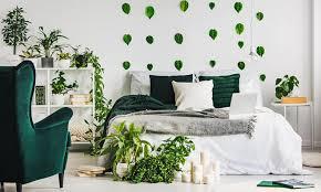 pflanzen im schlafzimmer gefährlich oder heilsam