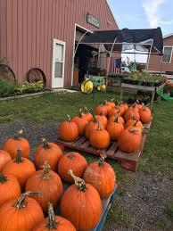Pumpkin Picking South Nj by The Mccann U0027s Farm Themccannsfarm Twitter