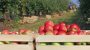 Pumpkin Picking Maryland by Here U0027s A List Of Atlanta Area Orchards For Apple Picking 11alive Com