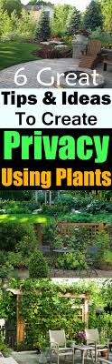 Best 25+ Backyard Privacy Ideas On Pinterest | Privacy Trees ... Ideas For Outdoor Privacy Screens Green Grass Extra Wide Back Garden Ideas 2833 Hostelgardennet 11 Ways To Create A More Relaxing Backyard Patio Spanish Style Cover Designs Choosing Bold Color Your Shed Old Brand New The Growers Daughter Front Yard Landscape Ask The Expert How Use Plants In City Garden Audzipan Anthology Pergola Oakley Our Land Organics With Trellis Better Homes And Gardens Best 25 Cheap Fence On Pinterest Panels
