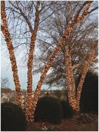 Tree Trunk Wrap Christmas Lights Admirably San Antonio Holiday Exterior Wrapping With Mini